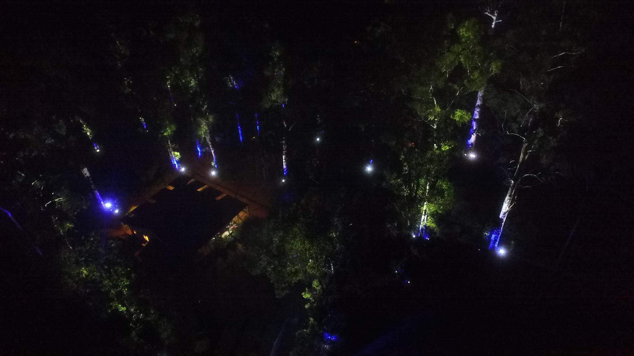 ktc-tree-drone-pic